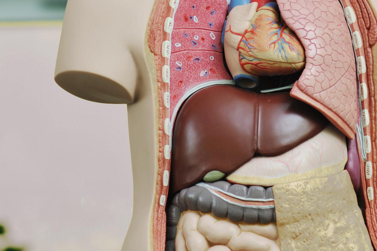 التهاب الكبد الفيروسي  ب ، أعراضه، طرق انتقاله، وعلاجه؟