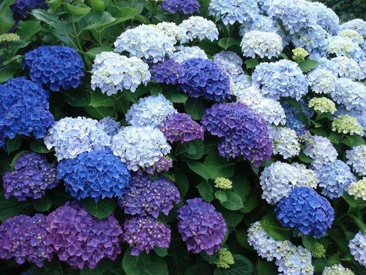 النباتات