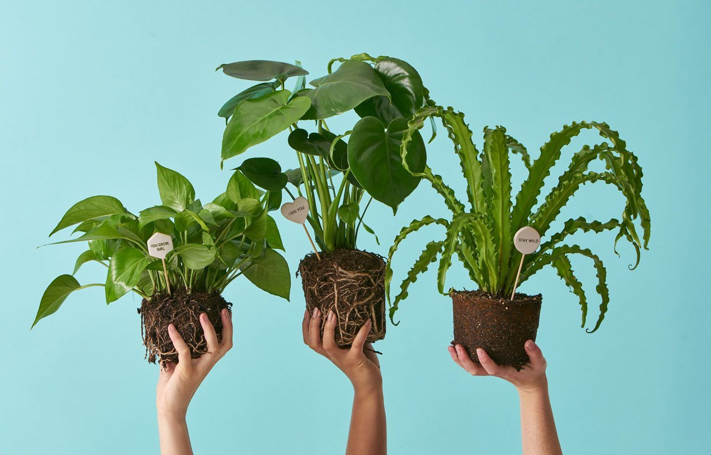 أخطر النباتات في العالم