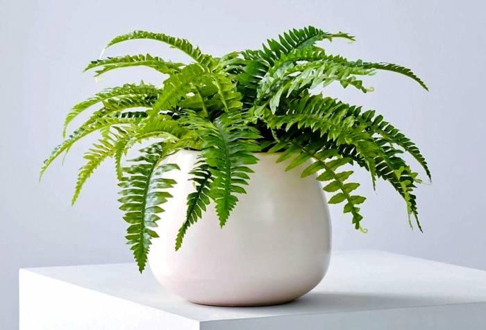 أفضل النباتات لداخل المنزل