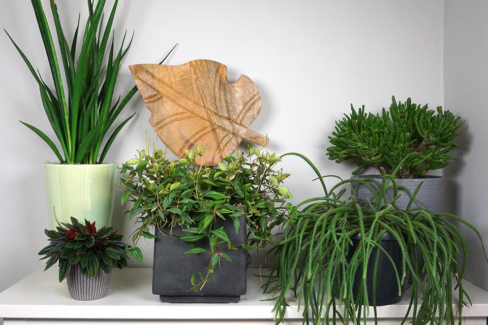 أفضل النباتات لداخل المنزل تعطيك الطاقة الإيجابية