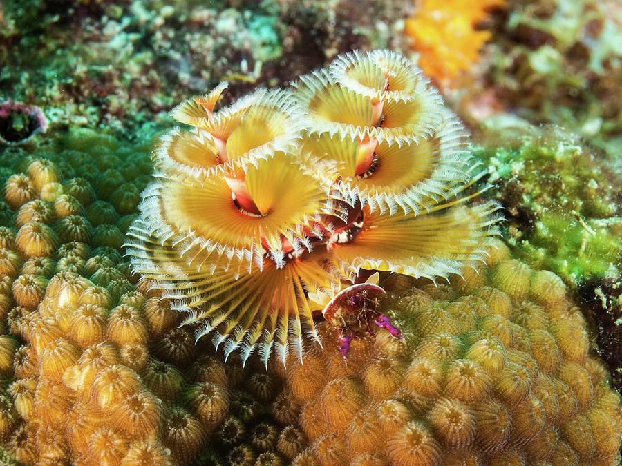 مخلوقات غريبة أعماق البحار