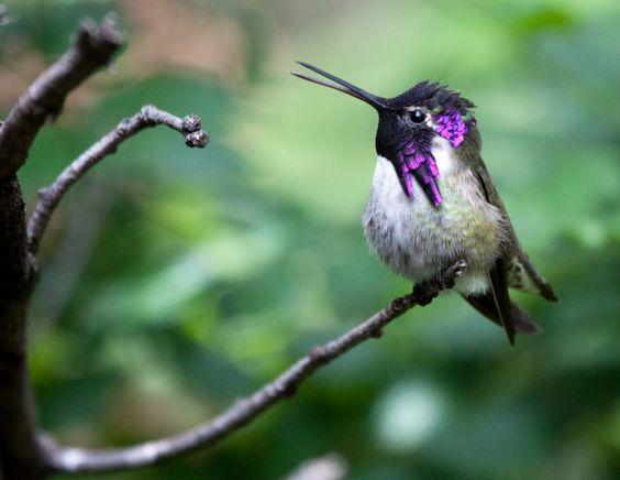 لغز الطيور الطنانة السر في حركة الأجنحة