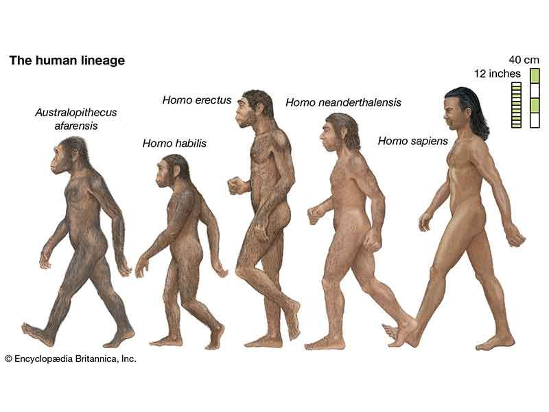 شكل البشر بعد 1000 عام