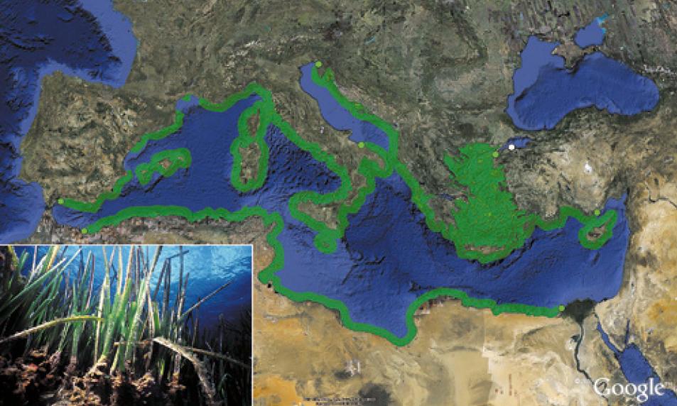 نباتات سوداء غريبة تظهر على شاطئ البحر المتوسط في مصر و تثير الذعر