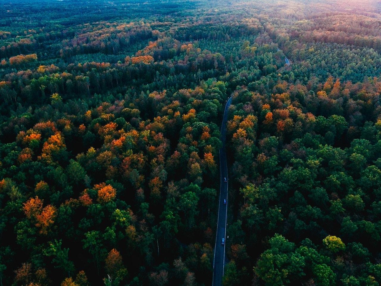 السياحة في ألمانيا .. أفضل الأماكن السياحية في دولة ألمانيا الغابة السوداء – The Black Forest