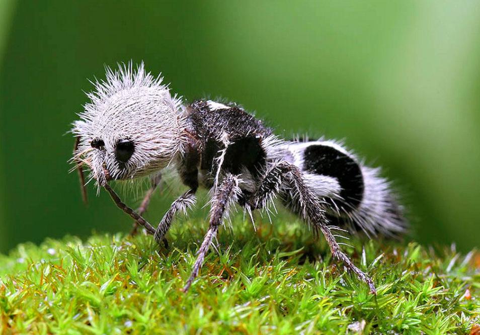 سلسلة أغرب الحيوانات في العالم .. حيوانات تمتلك قوى غريبة لن تصدقها