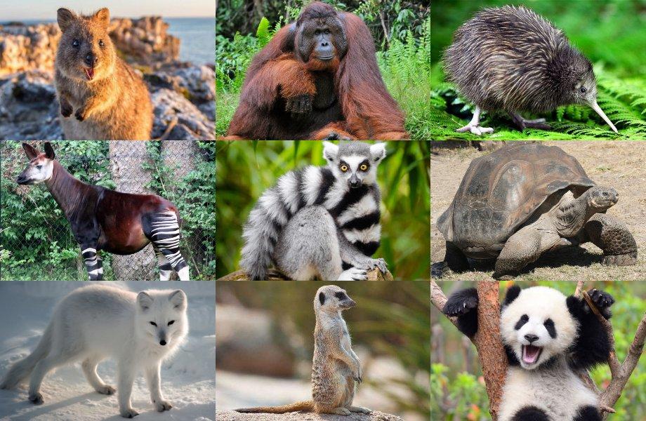 سلسلة أغرب الحيوانات في العالم .. حيوانات تمتلك قوى غريبة لن تصدقها ..